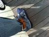 Ankle_belt_2