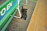 Yokokawa_cat